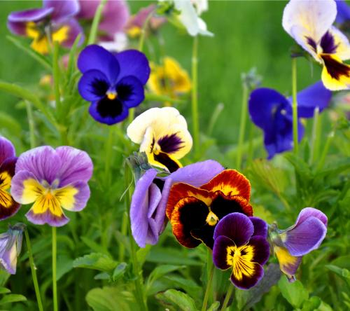 обои для рабочего стола широкоформатные лето цветы № 295757 загрузить